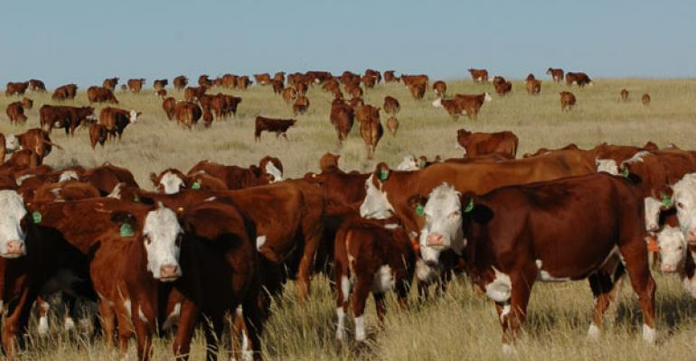 U.S. Cattle Supply Is Tightest Since 1952