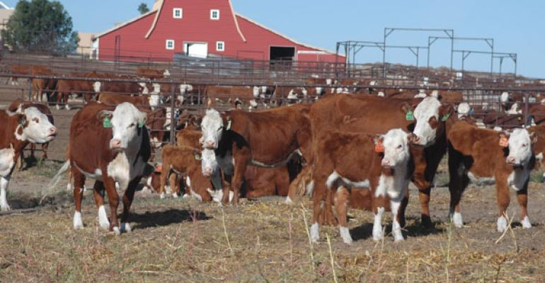 High-Profit Vs. Low-Profit Beef Producers