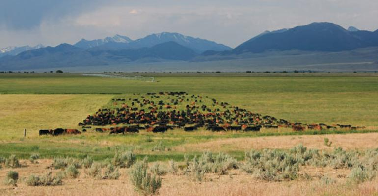 mob grazing intensive grazing tips