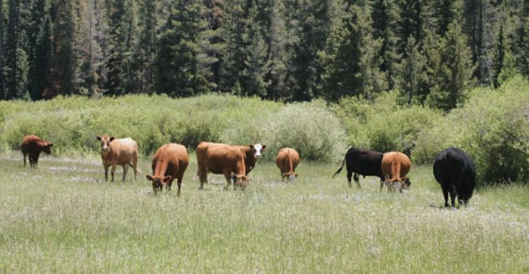 In Search Of 300-Day Grazing