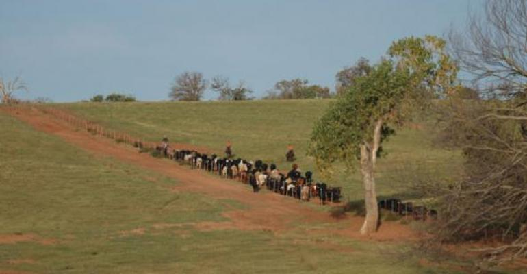 Cattle Ranchers Find Themselves Alone On The Range