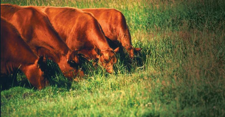Consider Ecological Functions To Better Manage Grazing