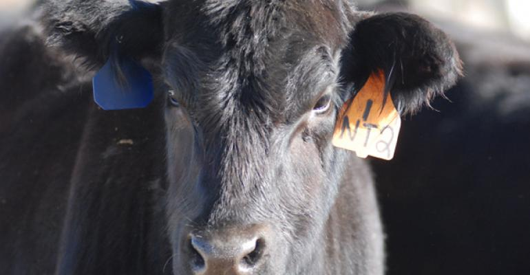 Study Provides Insight Into Small Cow-Calf Operations