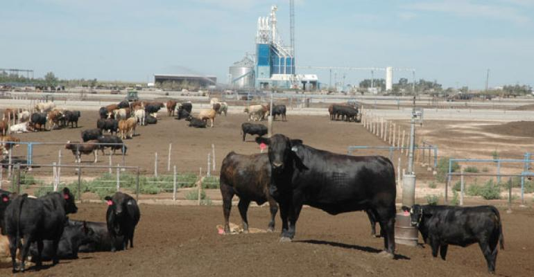 Southern Plains Feeders Steeling For Possible Fallout