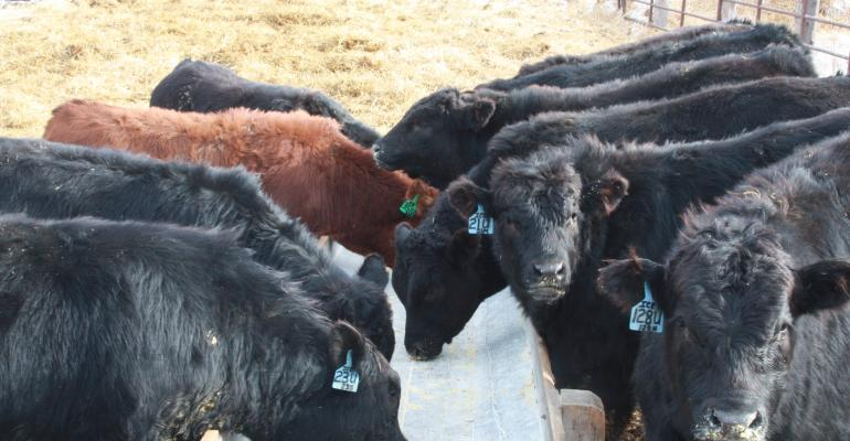 Tightening The Pursestrings In The Cattle Business