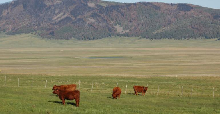 Can New Tools Help Identify Environmentally Fit Cattle For High Altitudes?