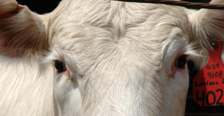 Cow Prices Remain At Record Levels