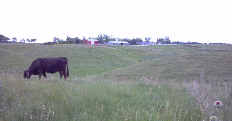 NEW Video, Photo Gallery: My Role As A Cattle Rancher