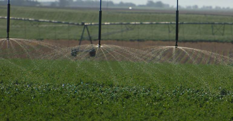 Evaluate Alfalfa Stands