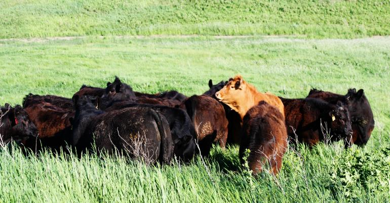Setting Standards For Replacement Heifers