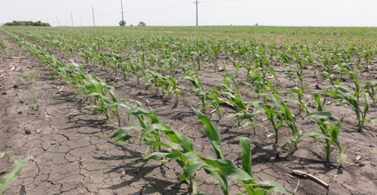 Dry Corn Photo Courtesy of Farm Industry News