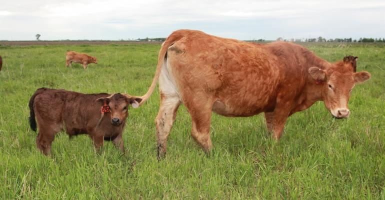 Ag Banker Advice: Opportunities And Risks In Ranch Business