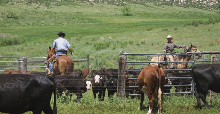 Hay Shortage Prompted Weaning And Calving Changes