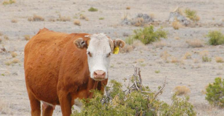 Study Herd Performance In Developing A Drought Strategy