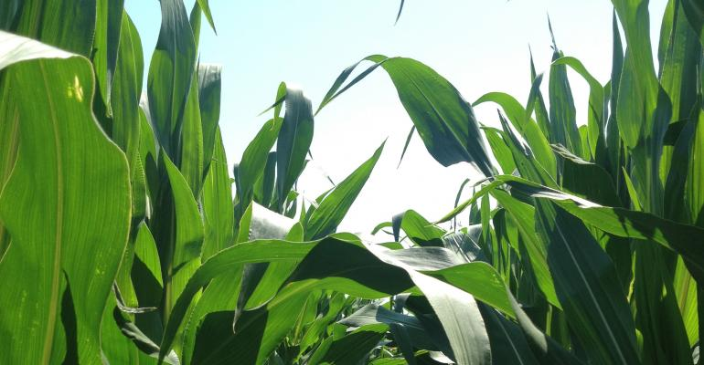 The Corn Rally Is On