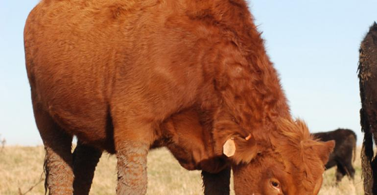 BEEF Veterinarian Provides Top Nine Drought Tips