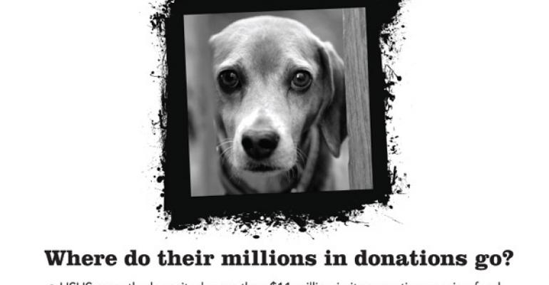 HSUS Criticized For Minimal Donations To Pet Shelters