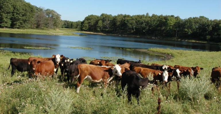 toxic algae can kill cattle