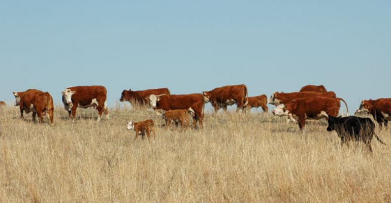 Pasture Values Continue To Rise, But Lag Cropland