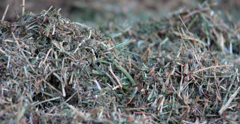 forage sample hay used as beef cattle feed