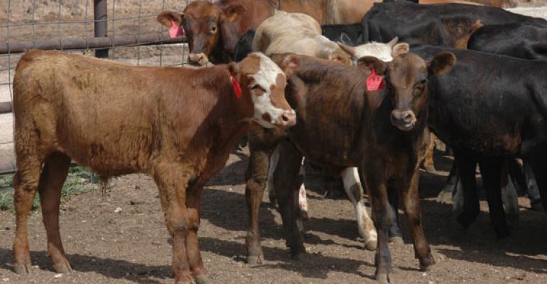Calf Prices Inch Higher