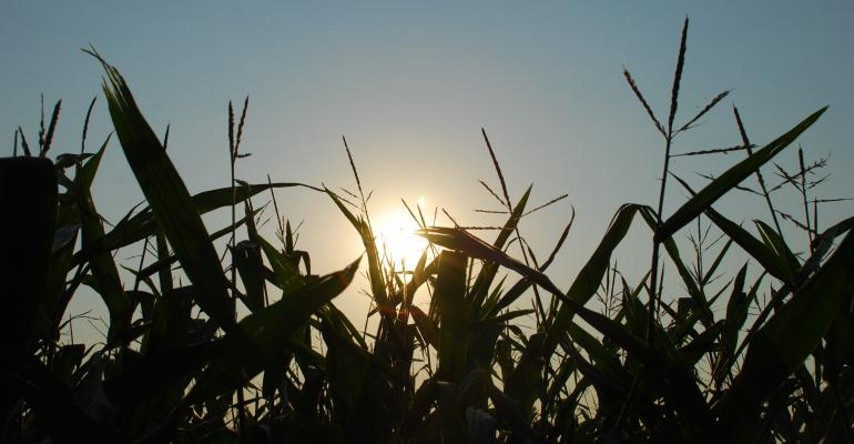 Recent Moisture Lifts Hopes and Prices