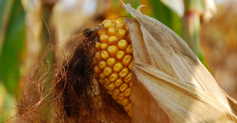 Corn Crop: How Short Is Short And How High Is High?