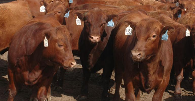 Feeder Prices Up; Buyers More Particular On Calves