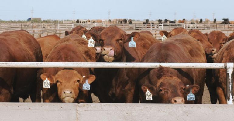 Watch Corn & Added Near-Term Beef Tonnage