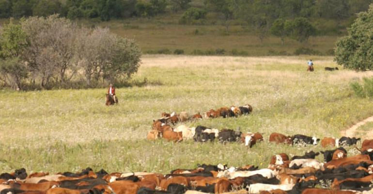 Ranchland Holds Steady In Texas, Surrounding Region