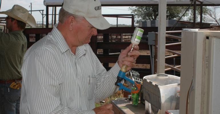 Beef Producer Using Antibiotics On Calf