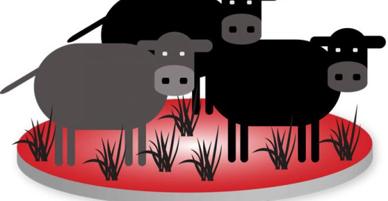 Beef Industry Basics On Stocker Industry