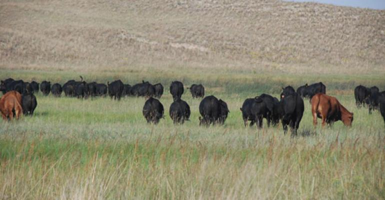 Preserving Green Grazing Even During Drought