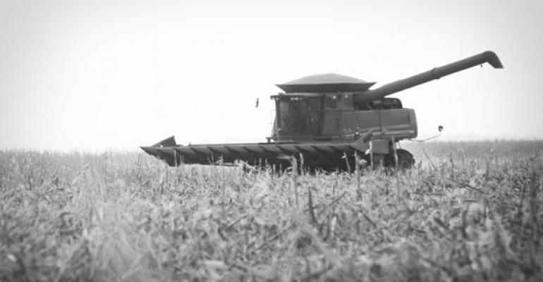combine corn harvest in field