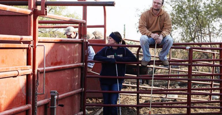 PregChecking Cattle Pays Dividends