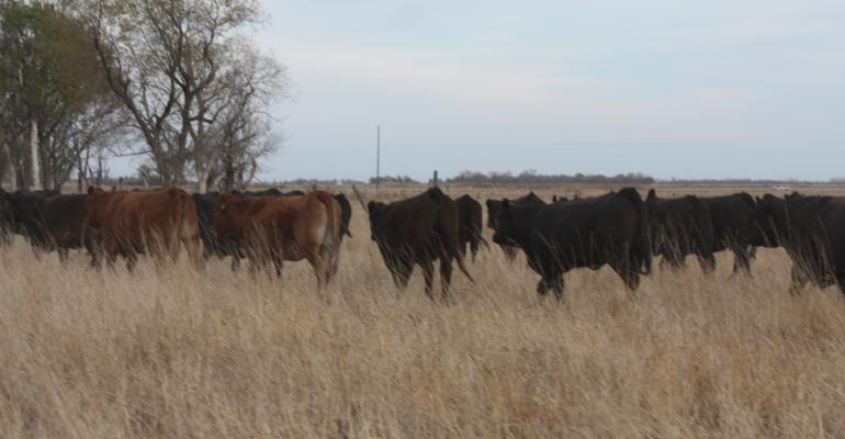 sustainabile beef