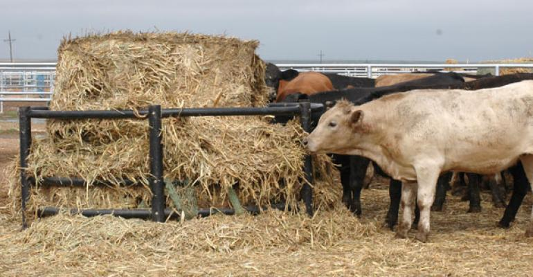 September Cattle On Feed Placements Are Down