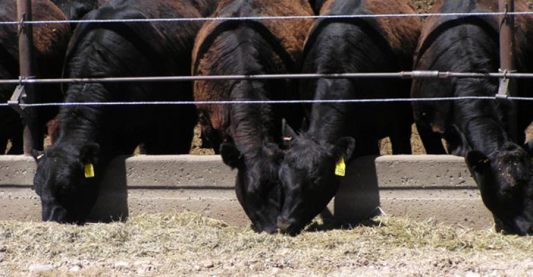 Feedlot Placements Down 13%