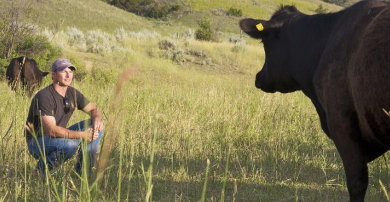 Lauren Chase Cow  Cowboy
