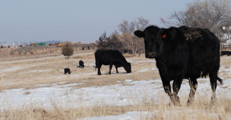 Winter Prep Essential For Beef Cowherd Management