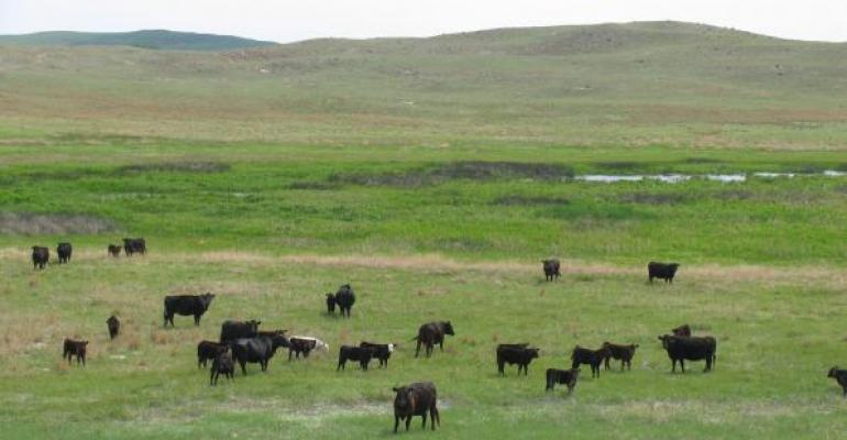 Reduce Cow Costs, Increase Revenue
