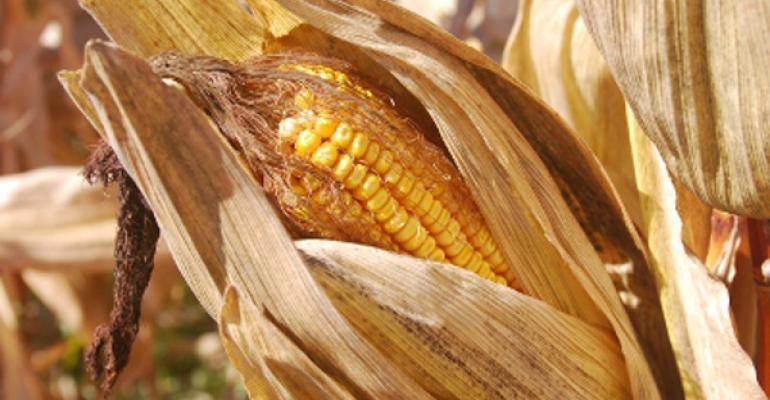 high corn prices