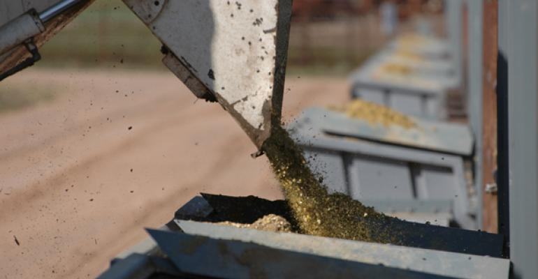 beef cattle feed options and tips