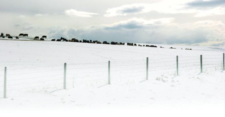 Beef Cattle Feed Management in Winter