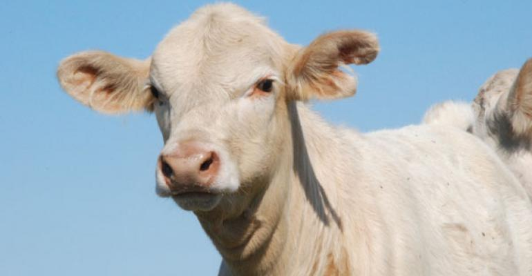 beef industry technology