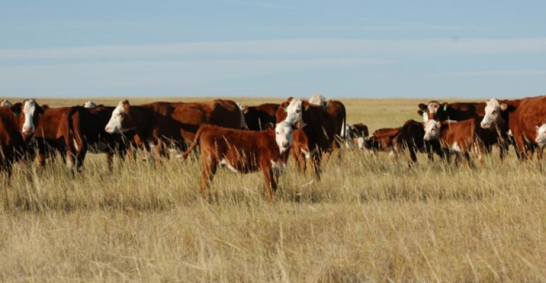2013 beef industry challenges