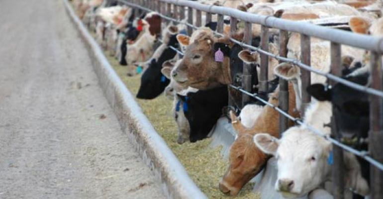Cattle Feeding Losses, Uncertainty Pound Cattle Prices