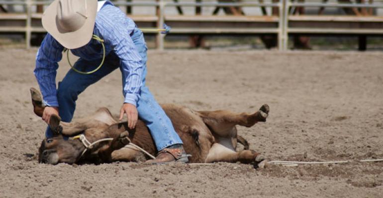 calf roping beef vet