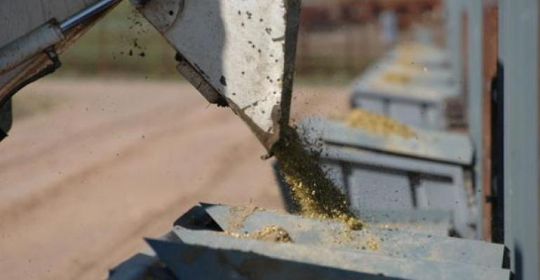 Beef cattle feed alternatives
