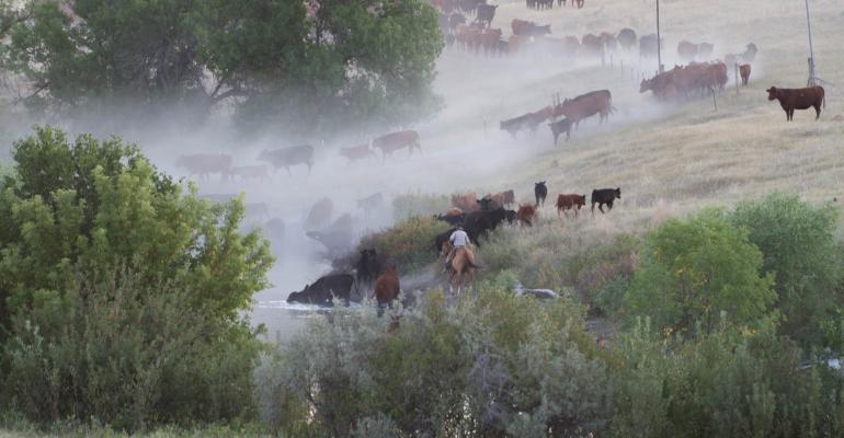 summer fire at padlock ranch